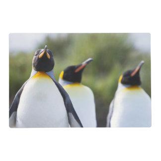 King penguins laminated placemat