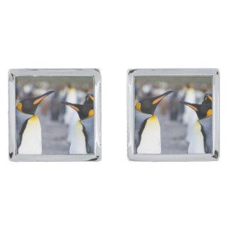 King penguins silver finish cufflinks