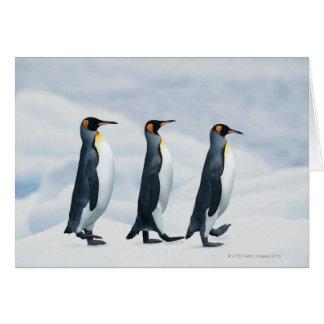 King Penguins walking in single file Card