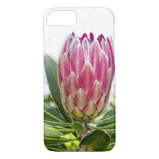 King protea art print iPhone 8/7 case