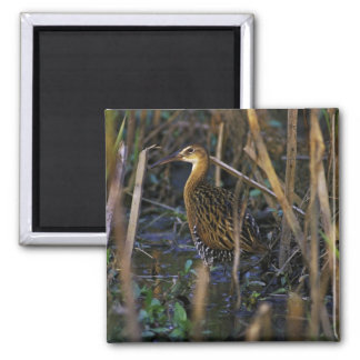 King Rail at Clarence Cannon National Wildlife Ref Refrigerator Magnet