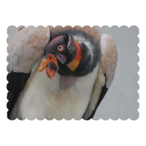 King Vulture Personalized Announcement