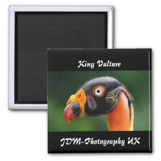 King Vulture Magnet