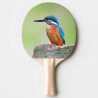 Kingfisher bird ping pong paddle