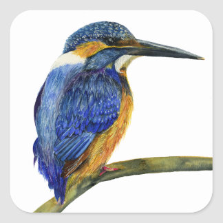 Kingfisher Bird Watercolor Halcyon Bird Square Sticker