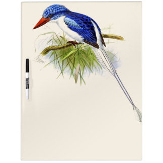 Kingfisher Bird Wildlife Animals Dry Erase Board