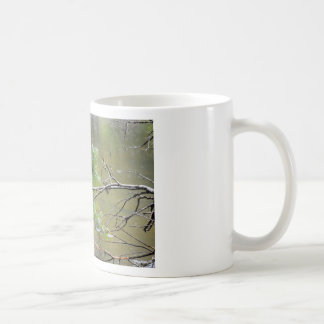 KINGFISHER EUNGELLA NATIONAL PARK AUSTRALIA COFFEE MUG