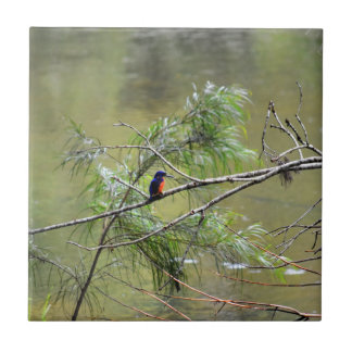 KINGFISHER EUNGELLA NATIONAL PARK AUSTRALIA TILE