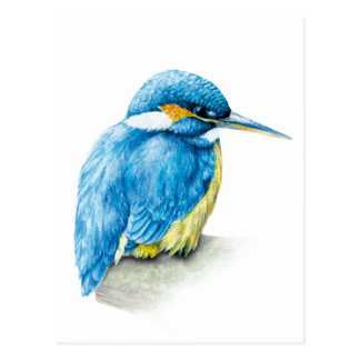 Kingfisher fine art watercolor postcard