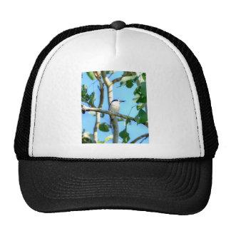 KINGFISHER IN TREE QUEENSLAND AUSTRALIA CAP