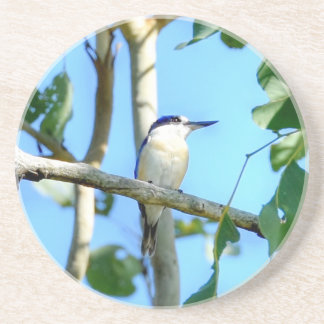 KINGFISHER IN TREE QUEENSLAND AUSTRALIA COASTER