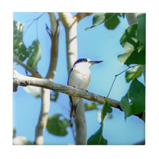 KINGFISHER IN TREE QUEENSLAND AUSTRALIA SMALL SQUARE TILE