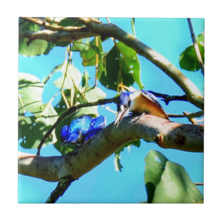 KINGFISHER IN TREE QUEENSLAND AUSTRALIA TILE
