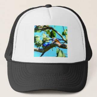 KINGFISHER IN TREE QUEENSLAND AUSTRALIA TRUCKER HAT