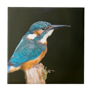 Kingfisher on a stick small square tile