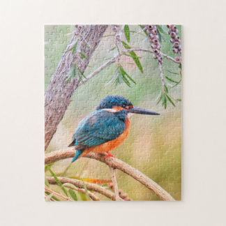 Kingfisher Perched on Branch Jigsaw Puzzle