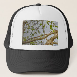 KINGFISHER QUEENSLAND AUSRALIA ART EFFECTS TRUCKER HAT