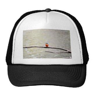 KINGFISHER QUEENSLAND AUSTRALIA CAP