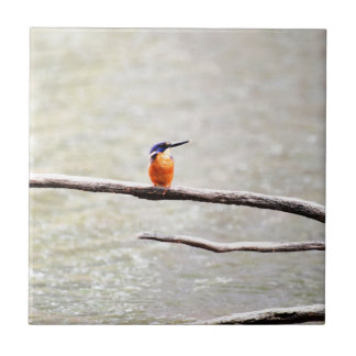 KINGFISHER QUEENSLAND AUSTRALIA CERAMIC TILE