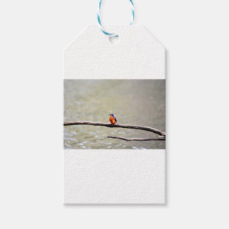 KINGFISHER QUEENSLAND AUSTRALIA GIFT TAGS