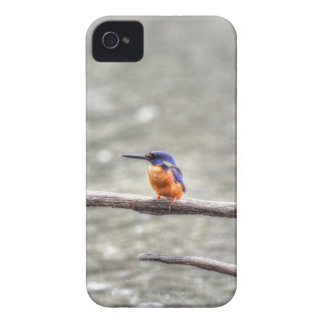 KINGFISHER QUEENSLAND AUSTRALIA iPhone 4 Case-Mate CASES