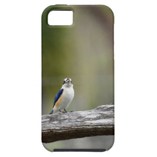 KINGFISHER QUEENSLAND AUSTRALIA iPhone 5 CASE