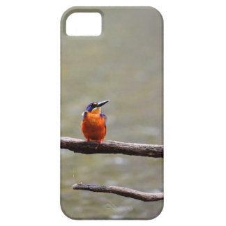 KINGFISHER QUEENSLAND AUSTRALIA iPhone 5 COVERS