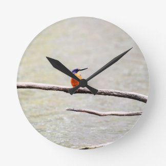 KINGFISHER QUEENSLAND AUSTRALIA ROUND CLOCK
