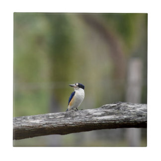 KINGFISHER QUEENSLAND AUSTRALIA TILE