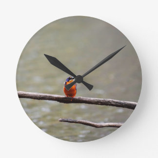 KINGFISHER QUEENSLAND AUSTRALIA WALLCLOCK