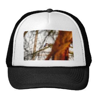 KINGFISHER RURAL QUEENSLAND AUSTRALIA CAP