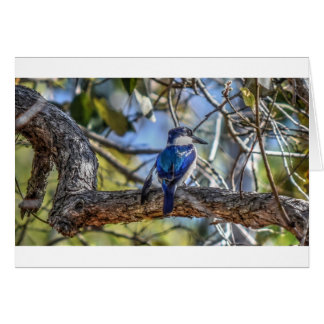 KINGFISHER RURAL QUEENSLAND AUSTRALIA CARD