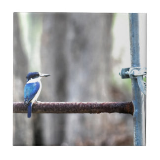 KINGFISHER RURAL QUEENSLAND AUSTRALIA CERAMIC TILE