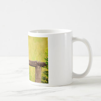 KINGFISHER RURAL QUEENSLAND AUSTRALIA COFFEE MUG