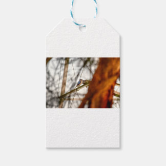 KINGFISHER RURAL QUEENSLAND AUSTRALIA GIFT TAGS
