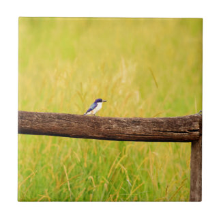 KINGFISHER RURAL QUEENSLAND AUSTRALIA SMALL SQUARE TILE