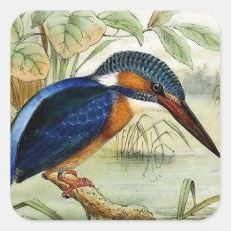 Kingfisher Vintage Bird Illustration Square Sticker