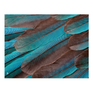 Kingfisher Wing Feathers Postcard