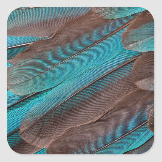 Kingfisher Wing Feathers Square Sticker