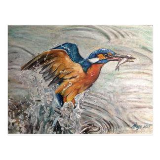 Kingfishing Postcard