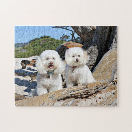 Kirby Shelby - Poodles on Carmel Beach Jigsaw Puzzle
