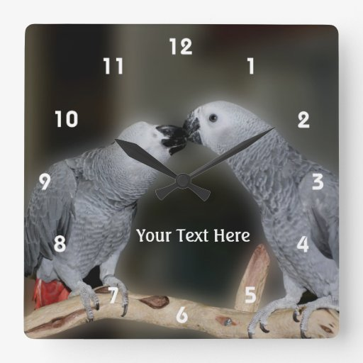 Kissing African Grey Parrots Animal Clock