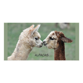 Kissing Alpacas photocard Personalized Photo Card