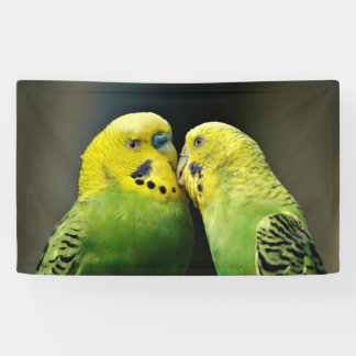 Kissing Budgie Parrot