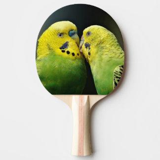 Kissing Budgie Parrot Bird