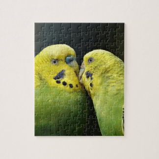 Kissing Budgie Parrot Bird Jigsaw Puzzle