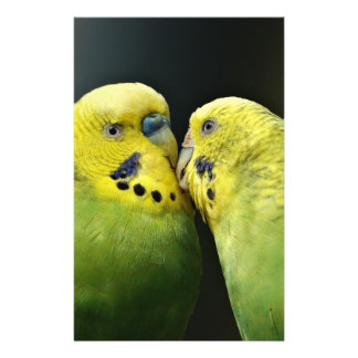 Kissing Budgie Parrot Stationery