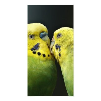 Kissing Budgie Photo Card