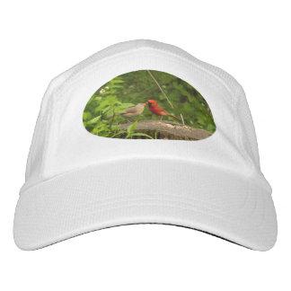 Kissing Cardinals Hat. Hat