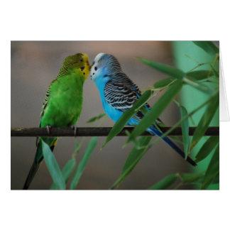 kissing parakeets greeting card